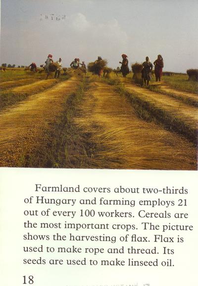 Harvestingflax